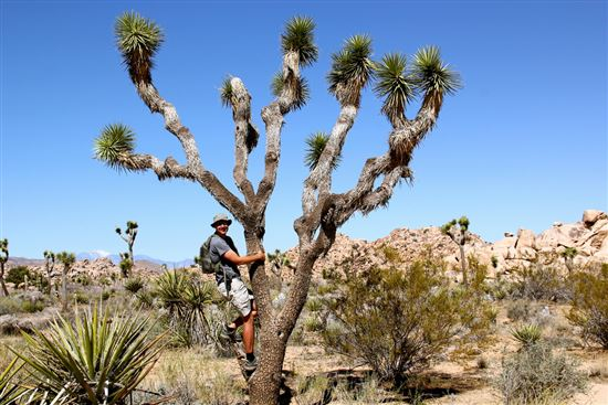 David and the Joshua Tree